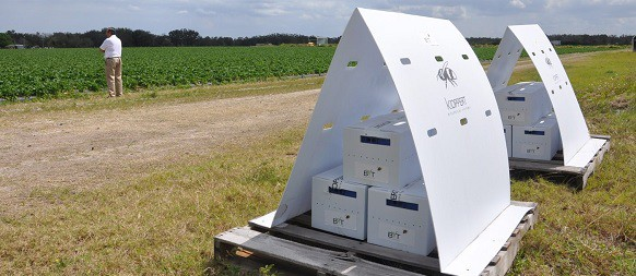 Nach einer Reihe erfolgreicher Trials nähert sich die Technologie von Bee Vectoring der lang erwarteten Kommerzialisierung