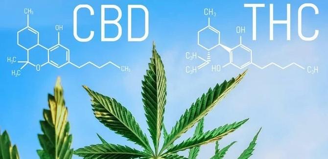 CBD und THC