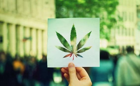 cannabis aktien 2020